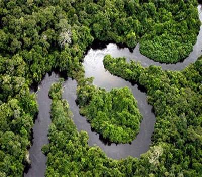 Harra Forest
